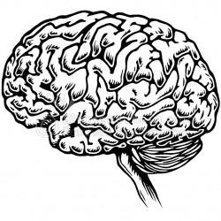 brain_wz
