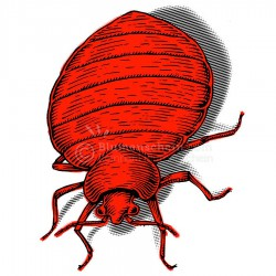 Bedbug_wz